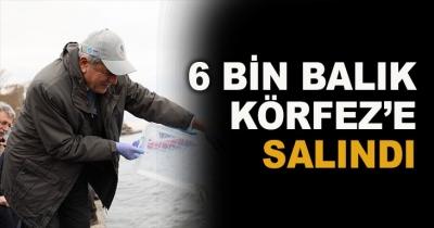 6 BİN BALIK KÖRFEZ'E SALINDI
