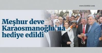 PAZARCILARIN ELİNDE KALAN MEŞHUR DEVE KARAOSMANOĞLU'NA HEDİYE EDİLDİ
