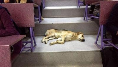 Sokak köpeği soğuk havada amfide uyudu
